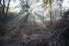 (Uno100) Tags: ray light sun zonnestraal forest bos winter veluwe posbank 2019 trees tree