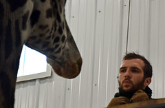 A Kiss for Murphy (MTSOfan) Tags: zookeeper murphy giraffe kiss pucker affection