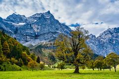 Rocks and Trees (*Capture the Moment*) Tags: 2018 austria autumn eng fotowalk grosserahornboden herbst october oktober sonya7miii sonya7m3 sonya7iii sonyfe1635mmf4zaoss sonyilce7m3 österreich