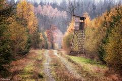 09112019-DSC_0069 (vidjanma) Tags: petitestailles arbres automne chemin mirador sapins