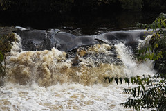 Dodder in full spate (Wendy:) Tags: dodder autumn river leaves colour waterfall water