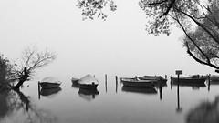Die Fische schlafen noch. (flori schilcher) Tags: schilcher ammersee diesen bayern wasser boot ufer baum morgen nebel