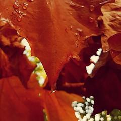 6/7 Personne sur la photo. Aucune explication. Une photo, une nouvelle personne par jour. Pas de défi. Plaisir du partage. Invitée par @GrimardC, j'invite @nisan_gogo à rejoindre la danse (sans obligation) #FotoOfmyLife (melina1965) Tags: novembre november 2019 îledefrance valdemarne créteil automne autumn fall feuille feuilles leaf leaves pluie rain eau water gouttedeau gouttesdeau waterdrop waterdrops