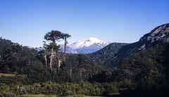 Volcán Callaqui. (Mono Andes) Tags: andes chile chilecentral regióndelbiobío araucaria volcáncallaqui mesetaeldescanso canogastour canogas2001 volcano volcán trekking backpacking