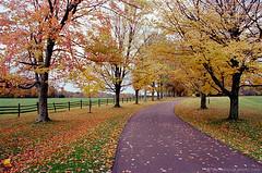 Country Road through Fall (PEN_0074) (masinka) Tags: etbtsy pentax spotmatic kodak ektar 100 fall autumn colors foliage trees alley road knox farm eastaurora nys newyork statepark fence rural countryside