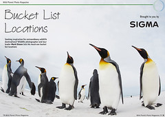 Free Content • Bucket List Locations (Wild Planet Photo Magazine) Tags: birding collaredpeccaries costarica crestedcaracara easterncottontails elephantseal eyelashedpitvipers falklands finland gentoo greaterroadrunner groundsquirrels hummingbird india issue44 kingvulture leopard magellenic norway penguin raptors rhino rockhopper sigma texas tiger tigers