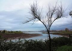 Bajamar en las marismas (eitb.eus) Tags: eitbcom 16599 g1 tiemponaturaleza tiempon2019 gipuzkoa hondarribia josemariavega