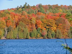 Day 16 - Returning to Calgary from Halifax, with a stopover in Ottawa -  Meech Lake 2 (benlarhome) Tags: ottawa gatineau ontario quebec canada autumn fall
