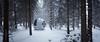 The First Snow (Avanaut) Tags: scalemodel miniature evapod 2001aspaceodyssey toy toyphotography toyphotographer avanaut originality winter snow forest finland helsinki