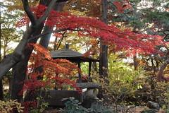 南昌荘 (shig.) Tags: 南昌荘 岩手県 盛岡市 紅葉 fall fallcolors fallenleaves fallfoliage fallingleaves fallentree autumn