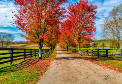 Fall in Kentucky (JuanJ) Tags: light people art nature lens landscape outside happy nikon bokeh lightroom naturephotography d850 city pink red white black building green architecture square shot awesome location squareformat skyportrait instagramapp new friends favorite cute me beauty photo interestingness amazing flickr picture explore photograph fav favs supershot flowers sunset portrait sky sun flower tree night clouds dof fineart greatphotographers