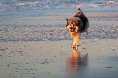_MG_0423 (Iris Harm Fotografie) Tags: harm hond iris beach bird birds buiten den denhaag dog dogs fotografie graffiti grieksegod haag honden irisharmfotografienl kijkduin outdoor photography sea seal sealion strand sun sundown vogel vogels water zand zee zeeleeuw zon zonsondergang