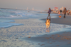 _MG_0412 (Iris Harm Fotografie) Tags: harm hond iris beach bird birds buiten den denhaag dog dogs fotografie graffiti grieksegod haag honden irisharmfotografienl kijkduin outdoor photography sea seal sealion strand sun sundown vogel vogels water zand zee zeeleeuw zon zonsondergang