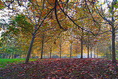 Culorile toamnei (Dumby) Tags: landscape bucurești românia sector3 park ior titan nature outdoor fall autumn