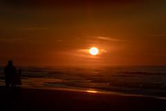 _MG_0583 (Iris Harm Fotografie) Tags: harm hond iris beach bird birds buiten den denhaag dog dogs fotografie graffiti grieksegod haag honden irisharmfotografienl kijkduin outdoor photography sea seal sealion strand sun sundown vogel vogels water zand zee zeeleeuw zon zonsondergang