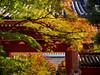 Autumn gateway (Tim Ravenscroft) Tags: maples fall autumn colour color gate gateway shinnyodo temple kyoto japan hasselblad hasselbladx1d foliage 京都 紅葉
