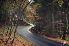 Winding through the autumn woods (Scotty Rae) Tags: autumn peebles scotland scottishborders tweeddale fall peeblesshire november dawyck drumelzier road windingroad fallcolors