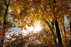 Hello sunshine ! (FocusPocus Photography) Tags: herbst autumn fall bäume trees blätter leaves laub foliage sonne sun