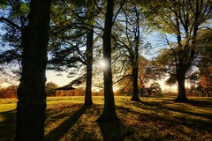 Autumn Glow, Tatton Park, Cheshire (Michael Dambach) Tags: autumn tattonpark cheshire trees nationaltrust