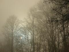 neblig (Jörg Paul Kaspari) Tags: totenmaar november eifel vulkaneifel nebel fog mist neblig bäume trees tree baum sonne sun nebelschwaden nebelwald