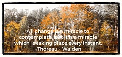 Yep! (Carol (vanhookc)) Tags: digitalgraphics sliderssunday hss georgia autumn henrydavidthoreau walden quotation change miracle