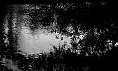 _DSC0932 - Bord de l'Oise (Le To) Tags: nikond5000 noiretblanc nerosubianco bw monochrome eau water rivière oise