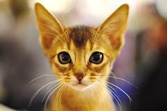 kitten (Сonstantine) Tags: cat canon catslife catsoftheworld catscatscats cute kitten meowmeow photo pic animals
