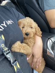 Louie going home with his mommy