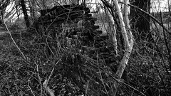 the broken wall (j.p.yef) Tags: peterfey jpyef yef wall broken trees b2 swmonochrome germany elitegalleryaoi bestcapturesaoi aoi
