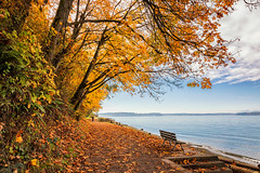 A Bench with a View (KPortin) Tags: hbm bench trees autumn water pugetsound lincolnpark