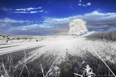 Infrared landscape (gillesfrancotte) Tags: 2018 aywaille ir july kenkor72 outdoor campagne countryside extérieur field goldenhour grass grassland infrared infrarouge juillet landscape landschap longexposure meadow nature outside paysage plaine rural summer tree wallonie belgique