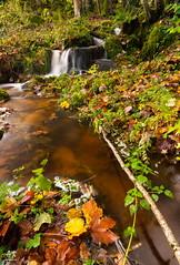 Filet d'eau (Vosges, France) (AT Photographie) Tags: eau water vosges nikon nature sauvage ruisseau