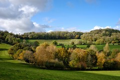 Touches of Gold.  (1) (margaretgeatches) Tags: autumn november blue sky clouds fields woodland gold yellow green deciduous trees plantation montacute somerset
