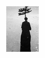 About ecology (hélène chantemerle) Tags: sol ombre arbre moimême soil shadow tree myself blackwhite noirblanc