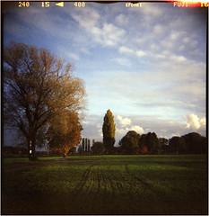 Herbstfeld (Ulla M.) Tags: dianaf selfdeveloped selbstentwickelt canoscan8800f toycamera toycam lomo lomography mediumformat mittelformat umphotoart filmphotography analog analogue analogphotography filmisnotdead filmshooter autumn herbst tetenalcolortec