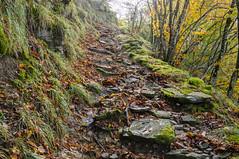 Starway to heaven (Alessio Corsi) Tags: trekking hiking mountains appending toscana tuscany italia italy nature naturaleza fall autumn foliage autunno nikon digitalphotography digital kilometroinverso