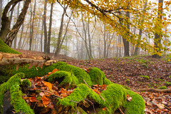 A foggy autumn day in the forest 🍂🌳🍁 (Martin Bärtges) Tags: neblig nebel fog foggy drausen herbstfarben herbst autumn autumncolors farbenfroh colorful outside outdoor nikonphotography nikonfotografie weitwinkel wideangle d4 nikon bäume trees wald woods forest naturliebhaber naturfotografie natur naturelovers naturephotography nature