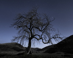 A night below the stars (GJ Duncan Photography) Tags: scotland frandy frandytree tree lonetree night dark stars space isolated quiet scenic beautyinnature outdoor cold frosty twisted branches scottishlandscapes