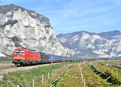 DB Cargo & MRCE Vectron Intermodal_Mezzocorona, Italy_231019_02 (DS 90008) Tags: dbcargo db vectron mrce railway mezzocorona train locomotive locohauled logistics wagons containers lorries outdoors nature 193331 193703 lok natural electrictraction electricfreight