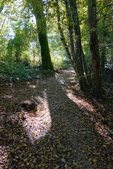 Walk along the Arve river (*_*) Tags: europe october morning matin 2019 hike randonnee nature hiking walk marche suisse switzerland geneve geneva sony rx100vii m7 autumn automne fall forest