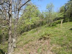 shale woodland_Highsaw tract_1 (Pete&NoeWoods) Tags: f19woo14 highsawtract bedfordcountypennsylvania shalewoodland naturalcommunity xeric woodland