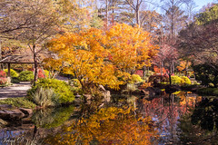 November reflections (Irina1010) Tags: november autumn colors trees golden foliage pond reflections japanesegarden maples gibbsgardens nature beautiful canon outstandingromanianphotographers coth5