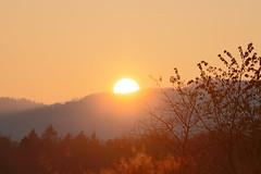 IMG_4424 (serafin-joshua) Tags: sun sunset set sonne abend herbst evening sonnenuntergang hdr photography colours farben wald teutoburger light trays tray licht orange bäume landschaft landscape orgasm