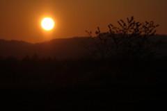 _MG_4395 (serafin-joshua) Tags: sun sonne sunset set sonnenuntergang untergang abend evening trees bäume colours colour farben orange forest teutoburger wald herbst autumn fall composition komposition