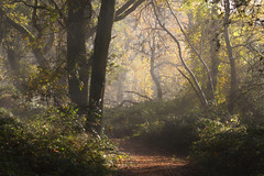 Woodland Path (neil smith2010) Tags: woodland path autumn landscape trees light