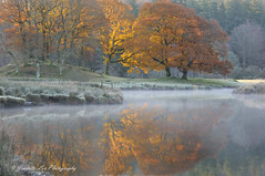 Golden Autumn Light (jeanette_lea) Tags: landscape united kingdom river brathay elterwater the lake district cumbria autumn colours sunrise dawn lowlight trees water reflections grass frost mist