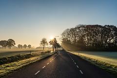 Sunrise in Holland series (Sjaco Manuputty) Tags: sunrise sunlight sunshine sunrays sunflare early earlymorning morning sun morningsun trees horizon shadow netherlands holland landscape landscapes landscapephotography grass field
