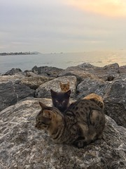 #cats #istanbul #turkey #landscape #nature (pelinturer) Tags: cats istanbul turkey landscape nature