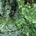 Herbs for Sale