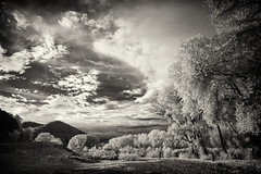 Near Bill Evens Lake, New Mexico (Robert_Brown [bracketed]) Tags: robertbrown photo photography photographer blackandwhite lifepixel infrared conversion ir bw billevans lake newmexico dslr canon10d rokinon 14mm ultrawide angle nature fall autumn clouds thesilvercityphotographer
